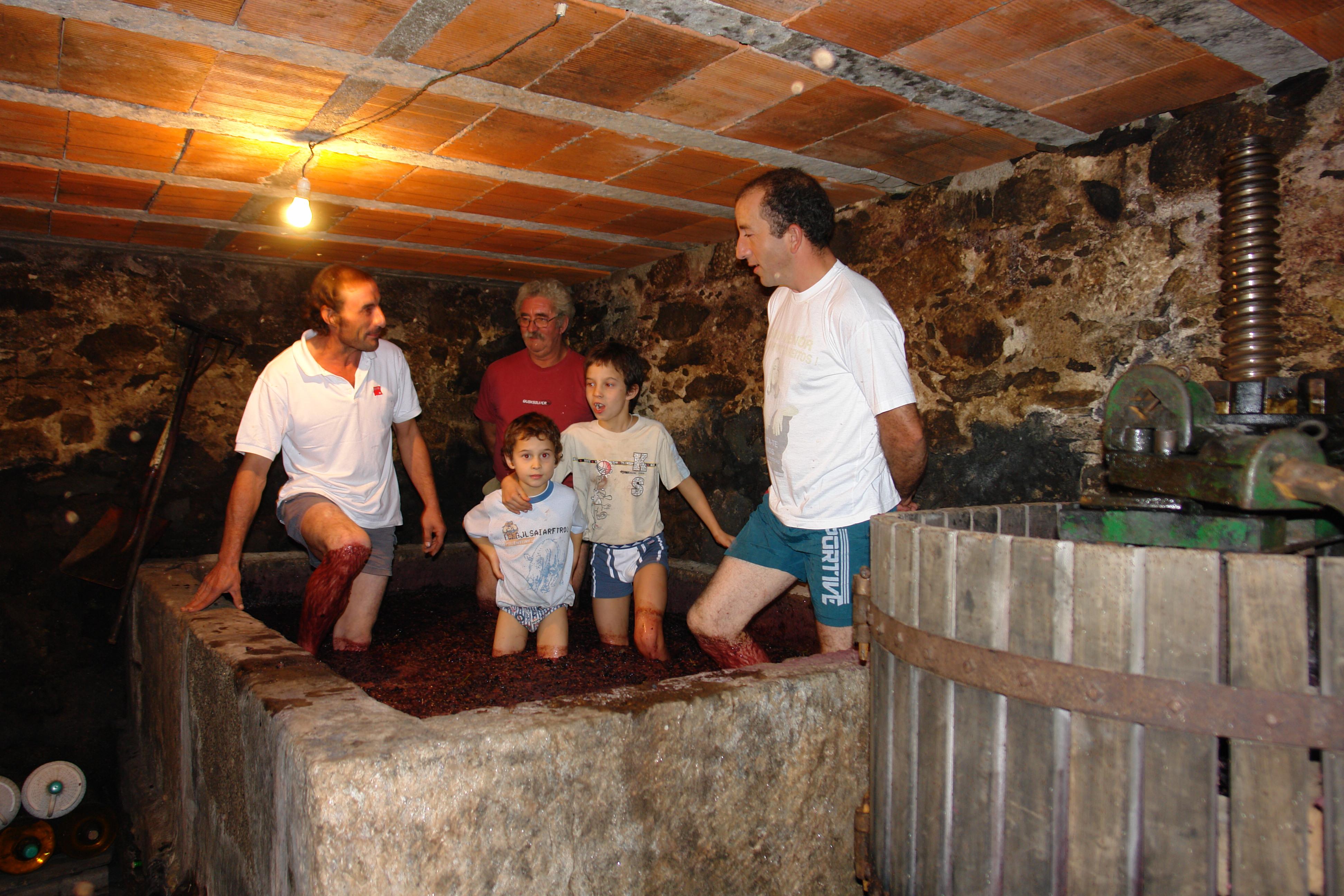 Vindimas: Tradição cumpriu-se em Arouca e Vale de Cambra