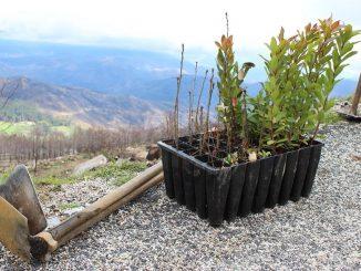 Arouca e Vale de Cambra assinalaram Dia Internacional da Árvore e da Floresta