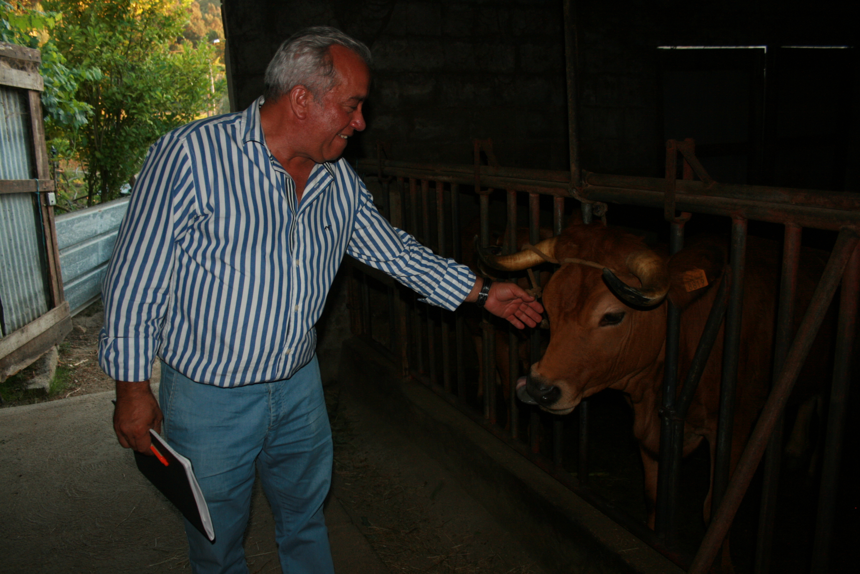 Criadores da raça arouquesa vão receber 75€ por cada cria