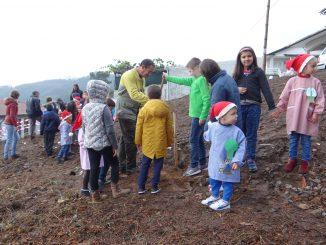 Crianças plantaram castanheiros no dia da Floresta Autóctone