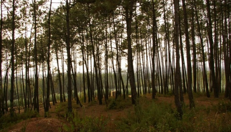 Municípios querem mais tempo e meios para limpar florestas