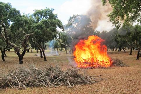 Arouca integra projeto piloto de sistema de avaliação de queimas de amontoados de combustível florestal e autorização de queimadas