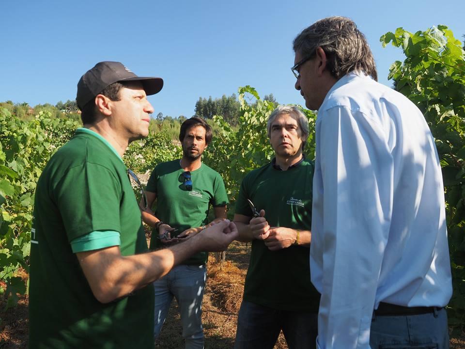 Eurodeputado Nuno Melo participa nas vindimas em Vale de Cambra