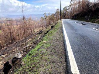 Incêndios um ano depois: recordar que a região foi uma das mais afetadas
