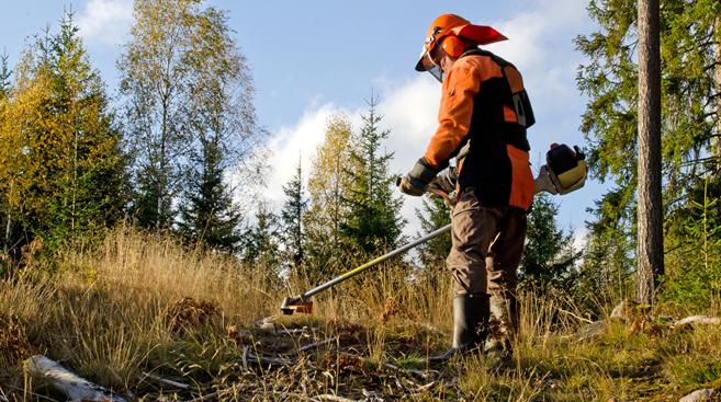 Governo revela prioridades (em Arouca são 11 as freguesias) na obrigatoriedade da limpeza de terrenos