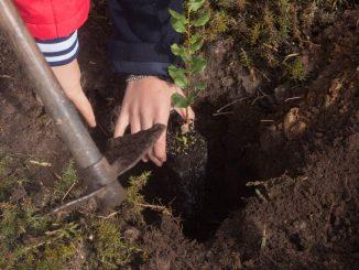 Associação Geoparque Arouca promove 'Reflorestação na Serra da Freita'