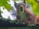 Curso Técnico da Escola Secundária de Arouca promove concurso fotográfico 'Paisagens Naturais no Arouca Geopark'