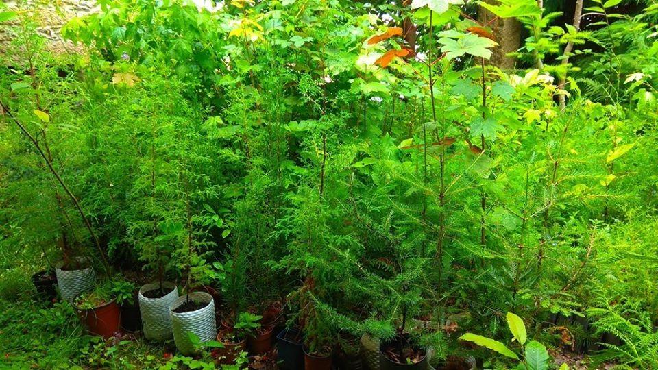 Associação Matéria-Prima promove última plantação da época