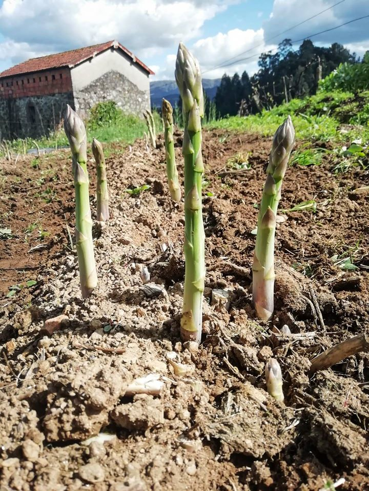 COVID 19 | Arouca Agrícola com entregas ao domicílio no concelho de Arouca