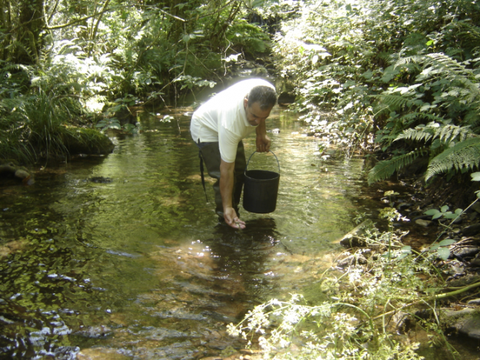 ICNF e UrtiArda procederam a repovoamentos nos rios de Arouca