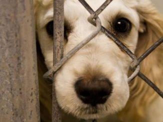 Cão alvo de maus tratos resgatado