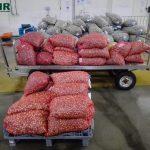 Apreensão de mais de duas toneladas de berbigão imaturo em Aveiro