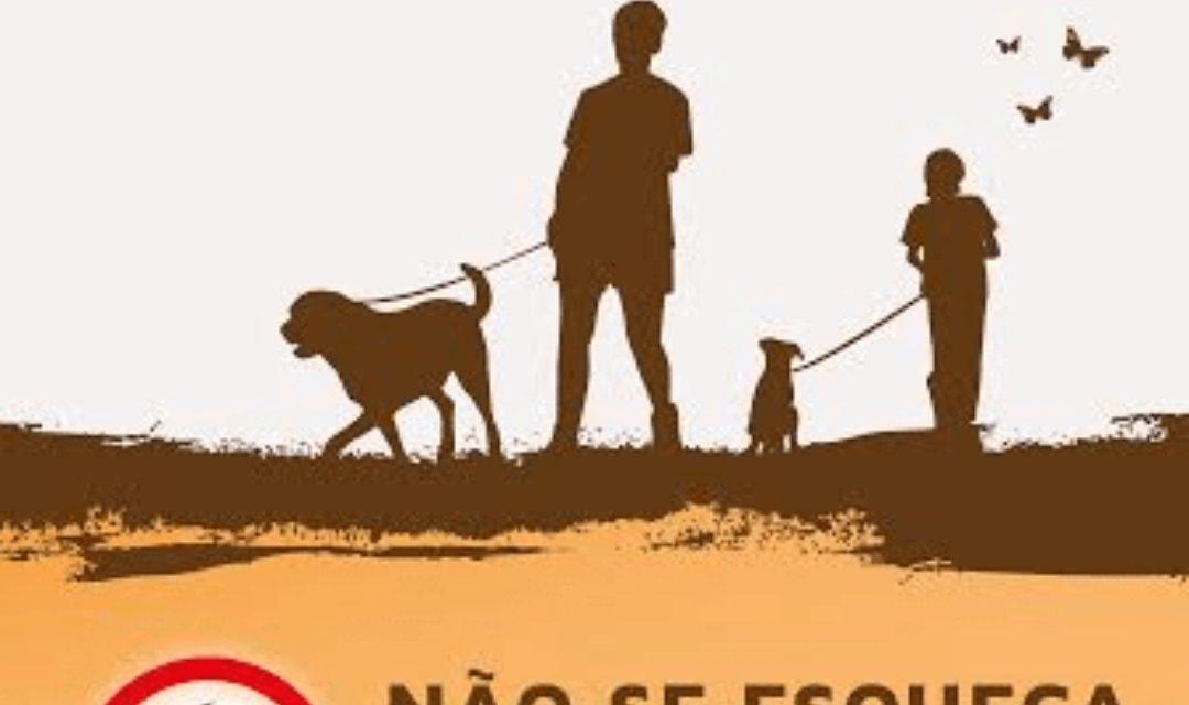 CASTELO DE PAIVA   Moradores da Avenida General Humberto Delgado queixam-se da falta de civismo de quem passeia os cães na rua