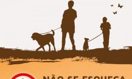 CASTELO DE PAIVA | Moradores da Avenida General Humberto Delgado queixam-se da falta de civismo de quem passeia os cães na rua