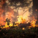 "MOLDES | Civil perde controlo de ""fogueira"" no Monte do Viso"
