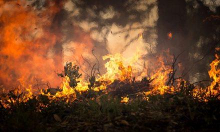 "MOLDES   Civil perde controlo de ""fogueira"" no Monte do Viso"