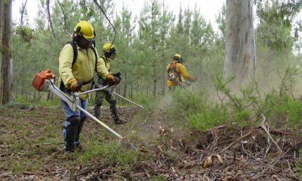 Prazo para limpeza de terrenos alargado para 15 de maio