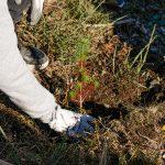 Município de Arouca vai plantar perto de 100 mil árvores no Parque Florestal de Santa Luzia