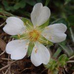 Cidadã descobre planta rara no Arouca Geopark