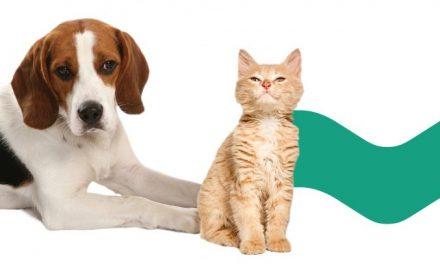 Município de Arouca promove campanha de sensibilização para esterilização de animais de companhia