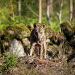"""Saída de campo """"No rasto dos mamíferos do Arouca Geopark"""""""