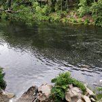Crimes ambientais no rio Paiva causam revolta