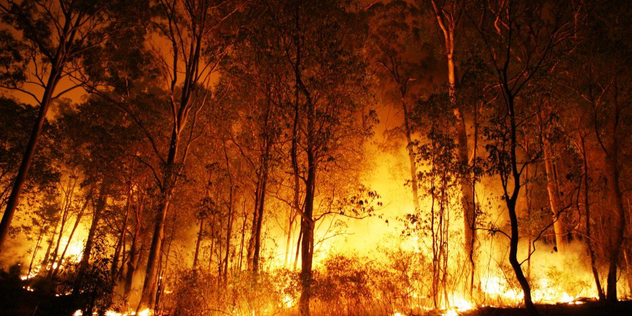 Três dezenas de Operacionais combateram um incêndio florestal em Castelo de Paiva