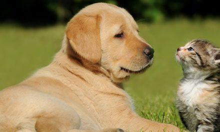 Câmara de Vale de Cambra promove Campanha para sensibilização de esterilização de animais